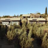 Pepe Bush Camp Builders - Olive Grove